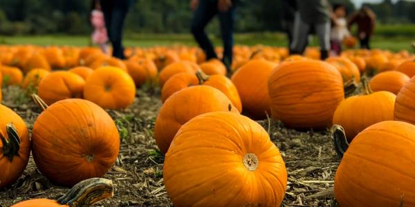 Halloween tendrá que vivirse de manera diferente este año. Conoce nuevas formas de celebrarlo este 2020.